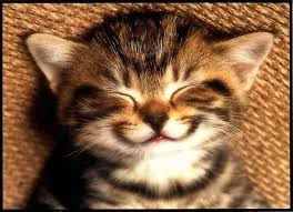 inner smile kitty