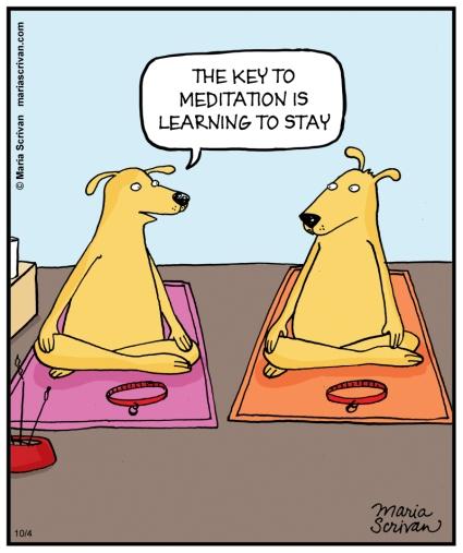 MEDITATION_DOGS-color