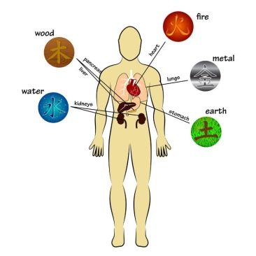 5 organs